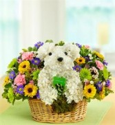 DOGGIE WOGGIE Arrangement in Springfield, MO | BLOSSOMS