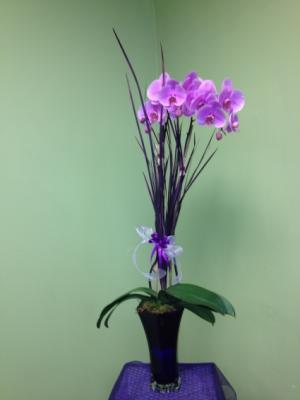 Elite Orchid Plant Lavender or White Dendrobium Available in Galveston, TX | J. MAISEL'S MAINLAND FLORAL