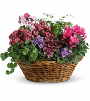 English Garden Basket EN 3P in Teaneck NJ ENCKE FLOWERS