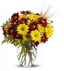 Fall For Daisies