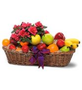 Fruit with Plant in Peru, NY | APPLE BLOSSOM FLORIST
