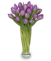 AMETHYST TULIPS Bouquet in Santa Cruz, CA | BOULDER CREEK FLOWERS & DESIGN CO.