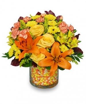 Candy Corn Halloween Bouquet in Naugatuck, CT | TERRI'S FLOWER SHOP