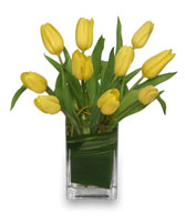 SUNNY TULIPS Floral Arrangement in Bracebridge, ON | CR Flowers & Gifts ~ A Bracebridge Florist