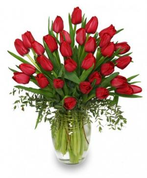 CHERRY RED TULIPS Bouquet in San Bernardino, CA | GRACEFUL LILY