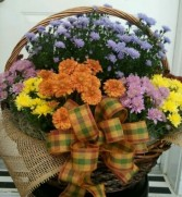 Funeral or Occasion Basket of  Assorted Mums in Athens, TN | HEAVENLY CREATIONS BY JEN