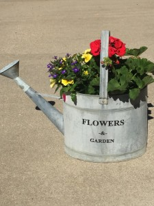 galvanized watering can Live Plants