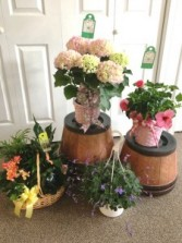 Garden Plants Mothers Day , Any
