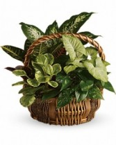 Gift basket for Men basket garden