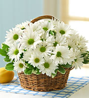 Happy Daisy Basket