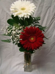 2 Large Gerbera Daisies in a vase with baby's  breath!  Miami Colors!!!