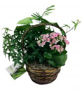 Indoor Dish Garden Plants in Thunder Bay, ON | GROWER DIRECT - THUNDER BAY