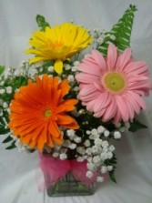 SPECIAL! SMALL BOUQUET WITH LARGE GERBERA DAISIES  ARRANGED IN A CUBE VASE WITH BABY'S BREATH! THANK YOU, JUST BECAUSE, GET WELL SOON, ETC.