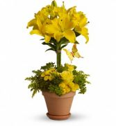Lily Topiary in Largo, FL | ROSE GARDEN FLOWERS & GIFTS INC.