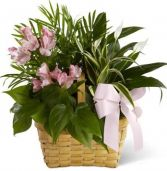 LIVEN SPIRIT  DISH GARDEN in Rockville, MD | ROCKVILLE FLORIST & GIFT BASKETS