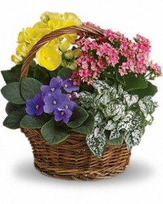 Living Gift Basket Gift Basket in Ventura, CA | Mom And Pop Flower Shop