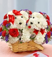 Lucky in Love Puppies in love  made with carnations in Miami, FL | THE VILLAGE FLORIST
