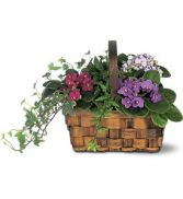 Mixed African Violet Basket in Peru, NY | APPLE BLOSSOM FLORIST