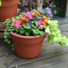 Mixed Patio Pot Plant in North Adams, MA | MOUNT WILLIAMS GREENHOUSES INC