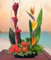 Modern Delight Tropical by Enchanted Florist
