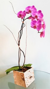 Oh So Beautiful Orchid
