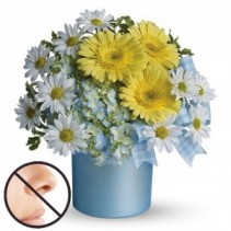 Once Upon a Daisy Baby Arrangement