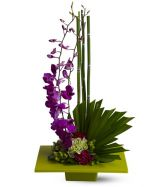 Orchid Zen Garden in Largo, FL | ROSE GARDEN FLOWERS & GIFTS INC.