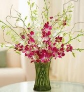ORCHIDS FOR YOU (in white or fuschia)