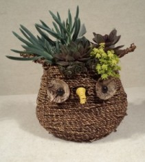 Owls, Chicks & Hens Galore Potted Plant