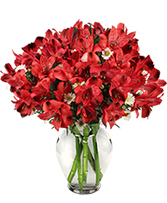 Passionate Peruvian Lily Bouquet