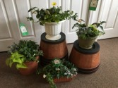 Patio Pots Mothers Day , Any