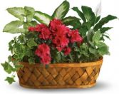 PLANT GALORE  BASKET in Rockville, MD | ROCKVILLE FLORIST & GIFT BASKETS