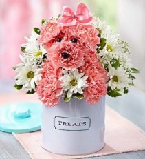 Princess Paws Treat Cansiter 1800 flowers