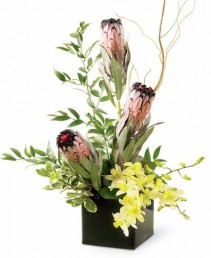 PROTEAS AND ORCHIDS ***LOCAL DELIVERY ONLY***
