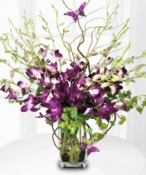 PURPLE ORCHID MAJESTY Flower Arrangement