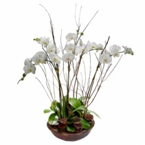 Queens Orchid Planter Several Phalenopsis in Planter