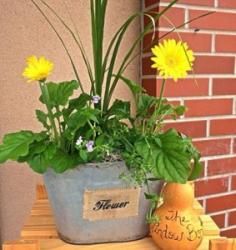 Rustic Gerbera Mother's Day Planter in Wahoo, NE | The Window Box Flower Shop