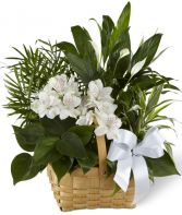 SERENITY   DISH GARDEN in Rockville, MD | ROCKVILLE FLORIST & GIFT BASKETS