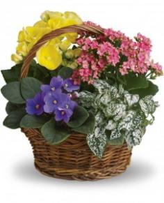 Spring Has Sprung Basket Teleflora in Springfield, IL | FLOWERS BY MARY LOU INC