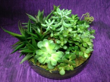 Succulent Dish Garden Live in with green