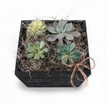 Succulents Mixed succulents in decorative wooden container