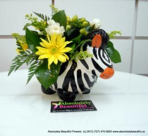 SUNNY ZEBRA New Baby Flowers in Saint Petersburg, FL | ABSOLUTELY BEAUTIFUL FLOWERS