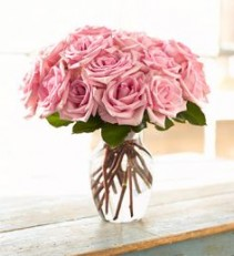 The Pale Pink Rose's Pure Beauty And Elegance