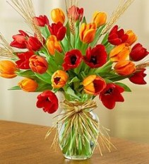Tulips for Fall Red, Yellow, Orange, Purple, and More!