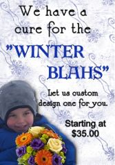 Winter Cure Designer's Choice in Hamden, CT | LUCIAN'S FLORIST & GREENHOUSE