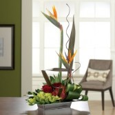 Your Very Own Paradise Tropical Design
