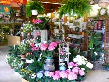About us clairs flower shop perkasie pa proudly serving the perkasie pennsylvania area were a full service local florist that is family owned and operated our courteous staff is ready to mightylinksfo