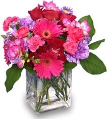 About us splurge flowers gifts calgary ab splurge flowers gifts is a professional local florist proudly serving calgary alberta and surrounding areas our friendly and knowledgeable staff is mightylinksfo