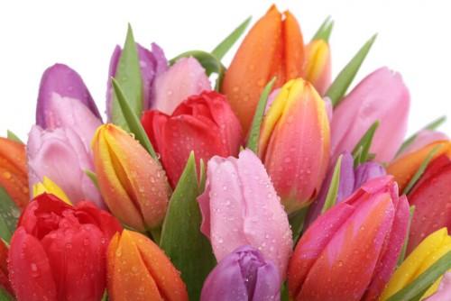 Spring Flower Designs Lebanon Garden Of Eden Floral Shop Lebanon Nh