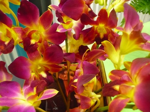 Amp tropical designs buckets fresh flower market abbotsford bc